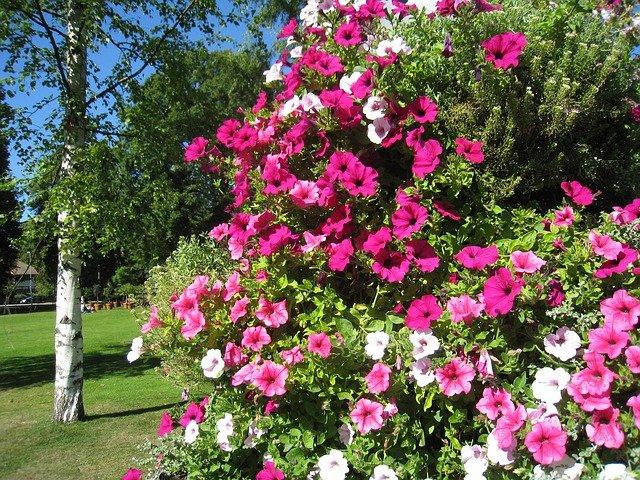 Tento nenáročný kvet sa postará o pestrofarebnú záhradu