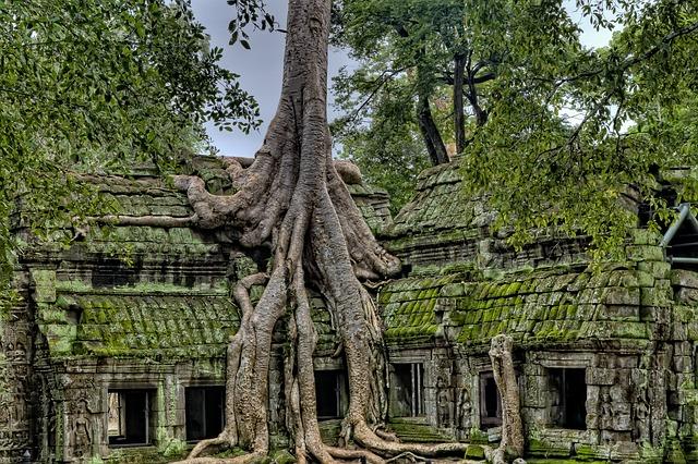 strom ve střeše