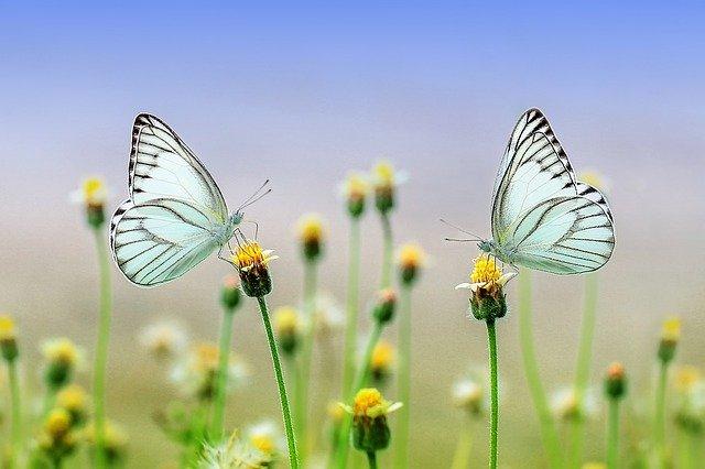 motýl.jpg